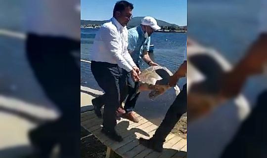 Sahile vuran yaralı caretta caretta tedavi altına alındı