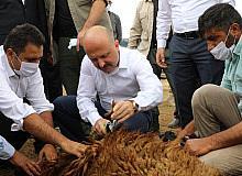 """Ağrı Valisi Varol: """"157 çiftçimiz 15 bin hayvan alarak ilimize kazandırmış oldu"""""""