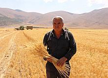 Ata tohumlarının hasadı yapıldı