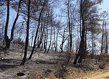 Çanakkale'de ormanlara girişler 1 ay süreyle yasaklandı