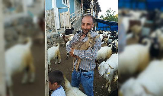 Çoban tarafından bulunan yavru karaca koruma altına alındı