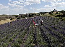 Fransa'dan gelirken getirdiği 1 avuç tohumla kendi işini kurdu