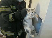 Havalandırma bacasına düşen kediyi itfaiye kurtardı