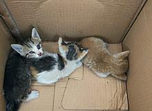 Havalandırma boşluğundan gelen sesleri fark ettiler, 3 yavru kurtarıldı
