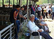 Karabük'te hayvan pazarında Arife Günü hareketliliği