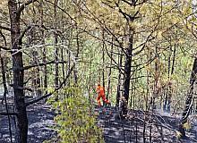 Karabük'te ormanlık alandaki yangın büyümeden söndürüldü