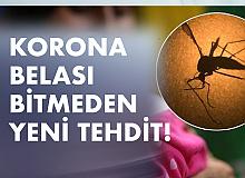 Koronavirüs Belası Bitmeden Şimdi de Zika Kâbusu...
