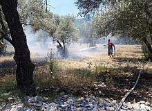Muğla'da zeytinlik yangını