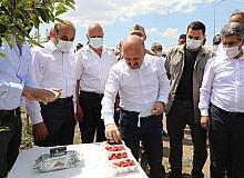 Vali Varol, meyve bahçelerini inceledi