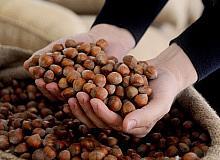 AB ülkelerine 357 ton 930 kilo fındık ihraç edildi