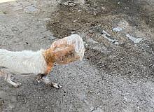 Başı plastik bidona sıkışan köpeği belediye ekipleri kurtardı