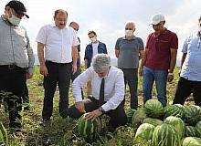 Erzincan'da hasat dönemi