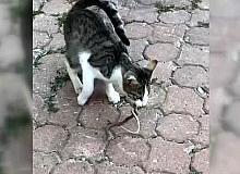 Kediyle yılanın kavgası kameraya yansıdı