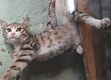 Kütahya'da çatıya sıkışan kediyi itfaiye kurtardı