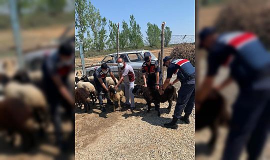 Mersin'de çalınan hayvanlar Adana'da bulundu