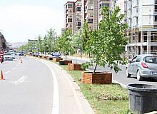 Sivas Belediyesi'nin ağaçlandırma çalışmaları devam ediyor