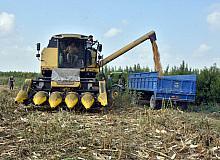 Tarsus'ta mısır hasadı yapıldı