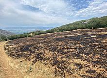 Tokat'ta anız yangını ormana sıçramadan söndürüldü