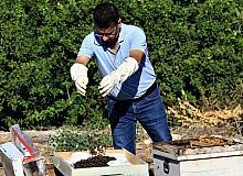 """1 milyondan fazla arısı zehirlendi, """"Hepsini çalsalar canım bu kadar yanmazdı"""""""