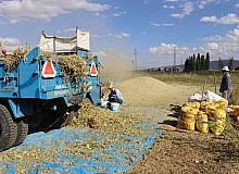 Çayırlı'da fasulye hasadı yapıldı