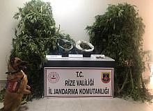Rize'de yasa dışı kenevir operasyonu