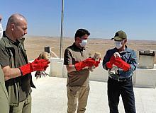 Tedavisi tamamlan peçeli baykuşlar doğaya salındı
