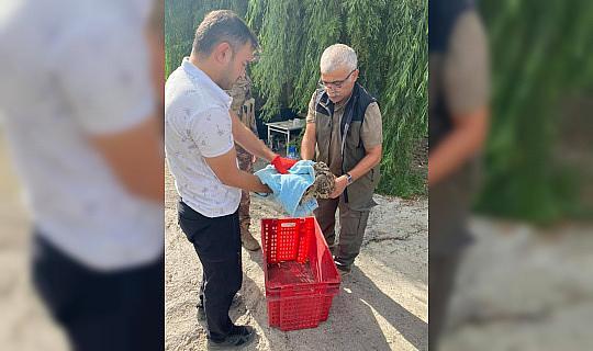 Yaralı halde bulunan puhu kuşu tedavi altına alındı
