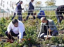 Ata tohumların kullanıldığı bostan ziyaretçilerini ağırlıyor