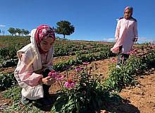Isparta'da devlet desteği ile dikilen ekinezyalar ilaç ve kozmetik sanayide kullanılıyor