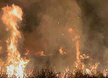 İznik Gölü kıyısında çıkan yangında 20 dönüm alan kül oldu