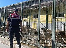 Jandarmadan hayvan bakımevlerine ziyaret