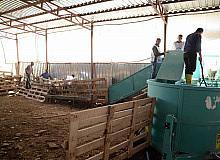 Kahramankazan Belediyesinden hayvan yetiştiricilerin işini kolaylaştıracak uygulama