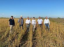 Tarsus'ta yerli soya çeşidi 'Samsoy'un hasadı yapıldı