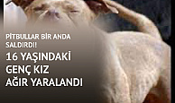 İstanbul'da Pitbull Kâbusu! Pitbullar 16 Yaşındaki Kıza Dehşeti Yaşattı!