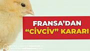 Fransa'dan 'Erkek Civciv' Kararı! Milyonlarca Civciv Sektörel Atık Diye Öldürülüyordu